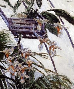 Gustave Caillebotte - Orchids